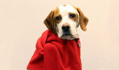 """""""الحزب الديموقراطي الاشتراكي"""" الألماني يمنع الكلبة """"ليما"""" من التصويت"""