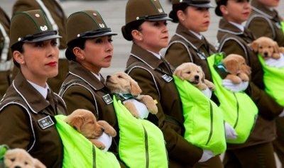 بالفيديو: في ذكرى الاستقلال… جراء اليوم كلاب المستقبل