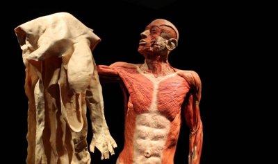 """16 """"خرافة"""" عن جسم الإنسان"""