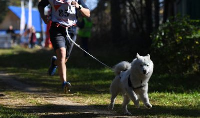 الكشف عن الاضطرابات النفسية من خلال الكلاب
