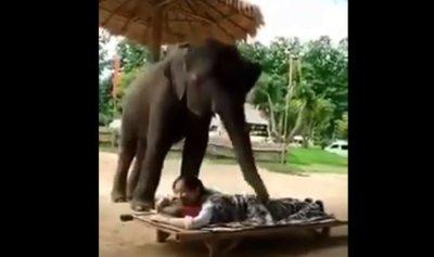 """بالفيديو: فيل """"يدلّك"""" امرأة"""