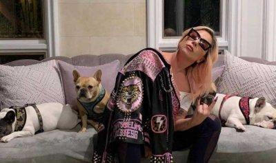 بعد جائزة النصف مليون دولار… ليدي غاغا تستعيد كلبيها