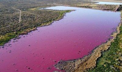 بحيرة في الأرجنتين تحولت إلى اللّون الوردي