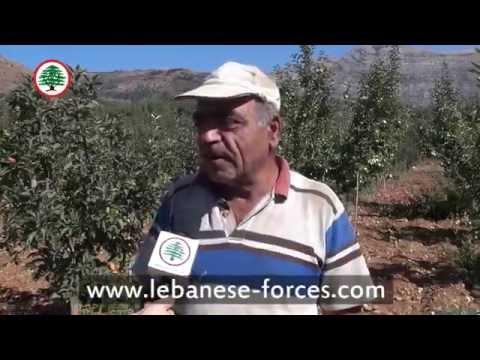 تفاح لبنان . . . يا لبنان الحلو